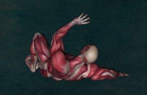 筋肉の写真